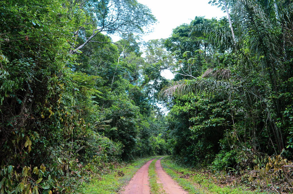Tapajós National Forest – 120 minutes in the Amazon Rainforest